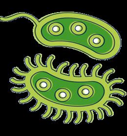 бактерии-кишечника